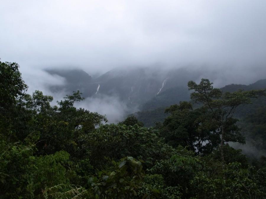 bosque protector la cordillera del cóndor
